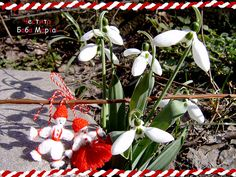 Baba Marta by Miss_Smile, via Flickr