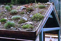 Skalka na střeše chaty