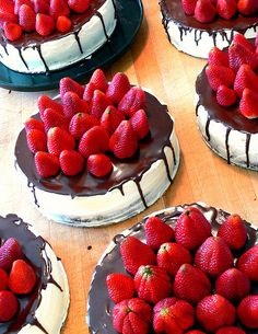 Seven delicious brownie and cheesecakes in the process of being decorated for a wedding.    Chef Claudia of Babushka Bakery  Sales phone:  708-784-1984 (Chicago area)  ascorbate@aol.com    Need a party catered or a venue for groups in the Chicago area? Chec Please take a look at our awesome wedding favor ideas at www.CreativeWeddingStyle.com