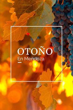 #OTOÑO #MENDOZA #VIÑEDO #VINO #UVA Mendoza, Poster, Scenery, Adventure, Billboard