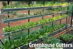 How to Grow Your Own Food - using rain gutters