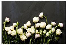 Mason Stefl, Floral Study V