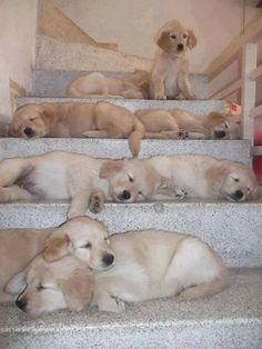 Wie komm ich da nur die Treppe runter ??