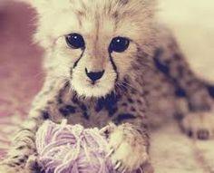 Cute Baby Tiger <3
