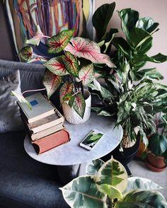 "20.5k Likes, 130 Comments - Urban Jungle Bloggers™ (@urbanjungleblog) on Instagram: ""Good morning Wednesday, good morning kitty, good morning plants! ☕️ by @roomor_…"""
