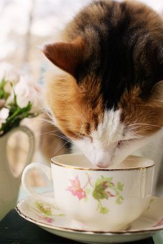 Get the scoop on the everyday moments that make up a cat owner's #DailyFancies.