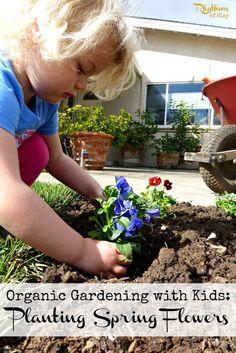Organic gardening With Kids -- Planting spring flowers.