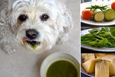 Juicing for Dogs and You too! ~ Lovely Greens