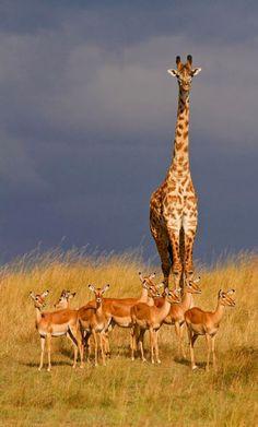 """Africa   """"Aufsicht in der Wildnis / Supervision in the wilderness"""".  Masai Mara, Kenya   ©Claudia N. Schreiber-Jäggi"""