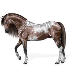 Glanzschecke, Pferd Araber Hellgrau #25050974 - Howrse