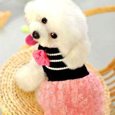 Poodles on Pinterest