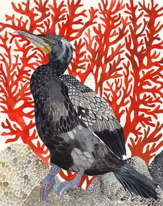 Cormorant and Red Coral - Archival Print