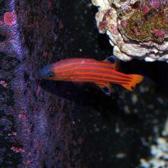 v Pretty Fish, Marine Fish, Snorkeling, Sea, Life, Beautiful, Diving, The Ocean, Ocean