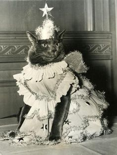 Princess Mickey, Queen of the Brooklyn Cat Show at the Hotel Granada in 1948