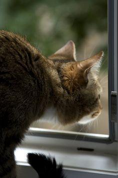 Bird watching,