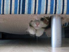 The cat is hiding inside the sofa.