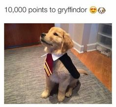 Gryffindog ;)