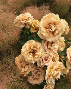 Winter Wedding Flower Inspiration, Winter Wedding Flowers, Floral Wedding, Spring Wedding Bouquets, Bridal Bouquets, Sustainable Wedding, Seasonal Flowers, Flower Farm, Affair