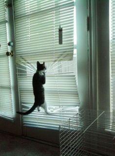 猫のいる家ではブラインドは避けたほうがいいことがよくわかる画像集