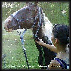 Good morning! Cooling tip for the week: Spraying water on a hot horse to cool him promotes convection cooling and assists with lowering the horse's core temperature. Spraying the legs and belly promotes faster cooling because blood vessels are closer to the skin in those locations. After the horse has been sprayed, it is important to scrape the water off. The water absorbs the horse's heat and if not scraped off, it could act as an insulating layer and actually make the horse hotter.