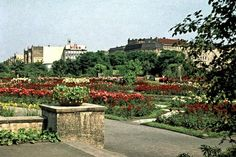 1956 Berlin-Gesundbrunnen,der Rosengarten