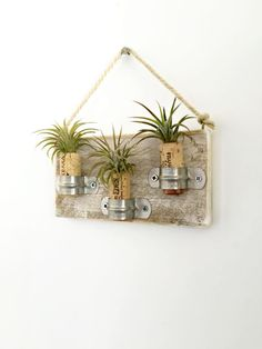 Brand new collection by omorfigia designs>>>>>  A lot of people love my air plant cork magnets, but not everyone wants to place them on the fridge, so I came up with an alternative that I think is perfect.   ALSO AVAILABLE WITH SUCCULENTS AS WELL.  Air Plants, also known as Tillandsia, are very low maintenance. They don't require soil to grow, only moderate light and a little spay of water every week.  FACT: Tillandsia is a primary ingredient in an herbal supplement to treat po...