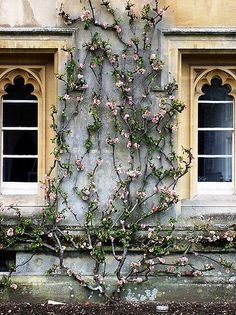 floral vines + beautiful windows