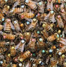 Bee life movie secret