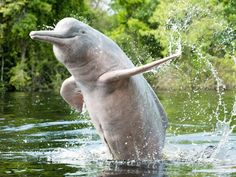 Vikramshila Gangetic Dolphin Sanctuary - in Bihar, India