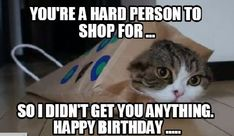 101 Funny Cat Birthday Memes for the Feline Lovers in Your Life Cat Birthday Memes, Sister Birthday Funny, Happy Birthday Funny, Happy Birthday Messages, Funny Birthday Cards, Birthday Wishes, Birthday Cats, Birthday Humorous, Birthday Freebies