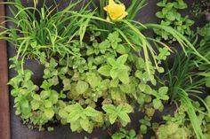 Tuin idee  De Vertiplant Double verticaal tuinieren www.vertiplant.nl www.facebook.com/verti-plant