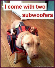 Hahahahaha! Wonderful!!! I come with two subwoofers! [#humor #dogs #puppies]