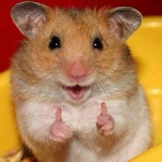I just love the hamster yall . I just love the hamster yall . Baby Animals Pictures, Cute Animal Photos, Funny Animal Pictures, Animal Pics, Baby Pictures, Funny Animal Jokes, Cute Funny Animals, Funny Cute, Funny Pics