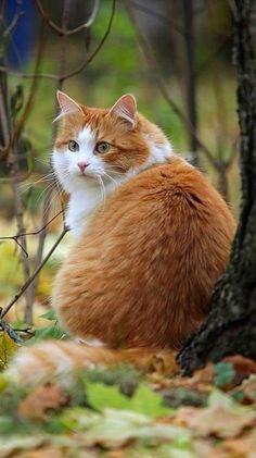 10 Orange And White Tabby Cats Ideas Cats White Tabby Cat Crazy Cats
