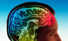 Researchers hope to discover how the activity of serotonin in the brain is involved in different mental illnesses. Caption: By understanding the biology of serotonin, drugs could be developed that only target cells relevant to a particular mental disorder – reducing side-effects. Photograph: Mark Thomas/Alamy