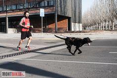 Nuevos deportes con tu mascota