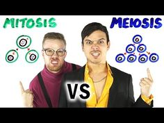 The cellular processes of mitosis and meiosis tear each other apart in a rap battle by AsapSCIENCE with Gregory Brown as mitosis and Mitchell Moffit as Mitosis Vs Meiosis, Biology Lessons, Ap Biology, Science Lessons, Science Classroom, Science Education, Teaching Science, Teaching Tools, Geography