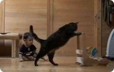 Gato enseña a caminar a un bebé