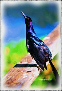 Black Bird by Ampoetic12, via Flickr