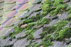2011-10-20: mossy roof tiles