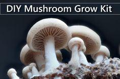 DIY Mushroom Grow Kits - easiest way to grow your own mushrooms at home... #gardening #homestead #homesteading #mushroomkitdiy
