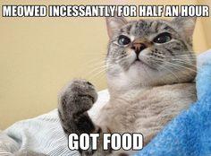 Success Cat Is A Winner