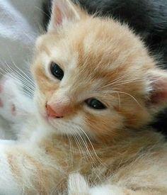 Kitten http://ift.tt/2rgOS4O