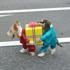Best dog custume ever!!!