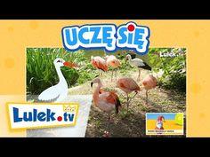 Wywiad z bocianem - Film edukacyjny dla dzieci - Lulek.tv - YouTube Asd, Language, School, Montessori, Youtube, Polish, Physics, Chemistry