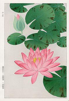Shodo Kawarazaki Spring Flower Woodblock Prints