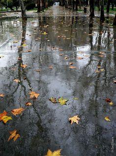 sevgili sonbahar, yağmurla işbirliği yapıp gezi parkına uzanmıştı... — Taksim Gezi Parkı'da.
