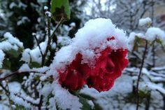 23. November 2015 - Schnee bis in die Niederungen