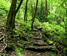 It's all about the vibration. This article describes the famous Abraham-Hicks Vibrational Scale. Mother Earth, Mother Nature, Beautiful World, Beautiful Places, Mystical Forest, Forest Path, Spiritual Path, Pathways, Wonders Of The World