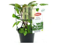 Plant Labels Color Print http://www.jlgreenhousesupplies.com/product/plant-labels-and-markers/